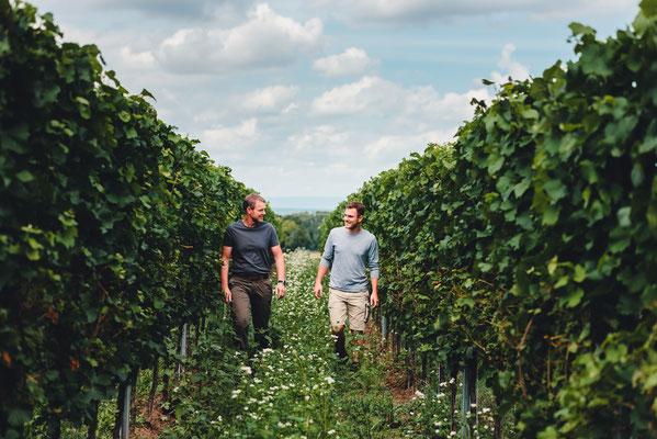 Weinbaufotografie in Rheinhessen