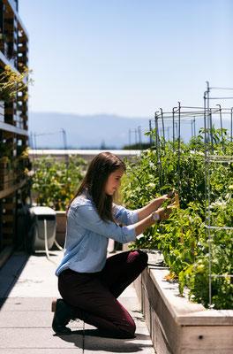 Kräutergarten und Gemüsegarten als Dachgarten in Hochbeeten