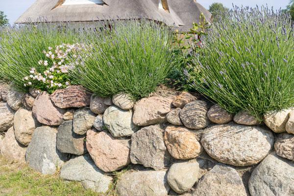 Hochbeet und Höhenabfang aus Naturstein Findlingen Wasserbausteine mit Lavendel und Rosen