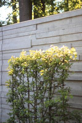Formgehölz an Sichtschutzwand Naturstein Klinker