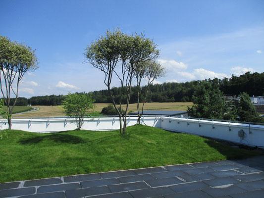 Dachterrasse Rasenfläche Rasenhügel mit automatischer Bewässerung und Felsenbirne Belag anthrazit Betonplatten