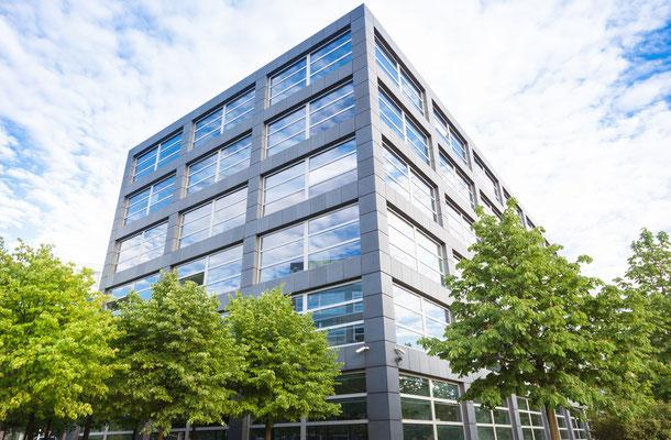 Firmengarten Begrünung mit Solitärgehölzen Tilia Linden