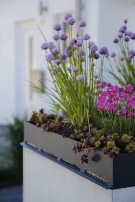 Müllbox Müllbehausung Beton und Pflanzschale mit Sedum Allium Kräuter