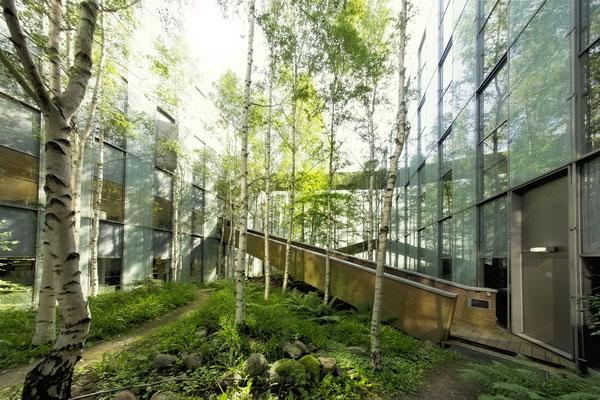 Firmengarten mit Birken Solitärgehölze und naturnaher Bepflanzung