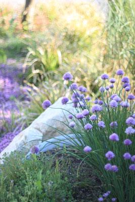 Üppige Beetbepflanzung mit Kräuter Allium Thymian Lavendel und Einfassung aus Jurakalk Naturstein