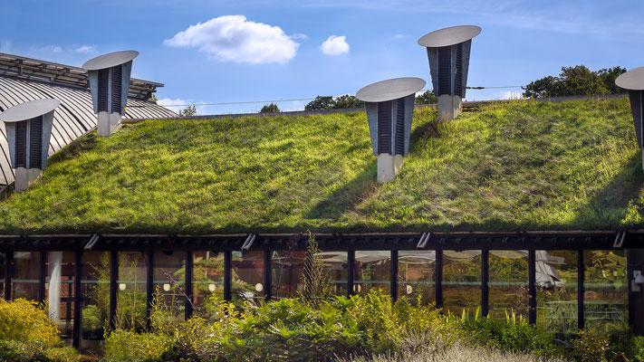 Dachbegrünung ökologisch und wirtschaftlich wertvoll