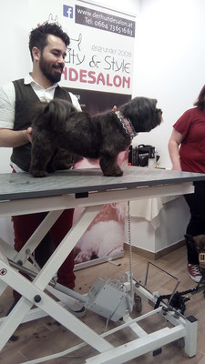 Workshop im Hundesalon Beauty & Style bei Nina Landrichter in Hollabrunn