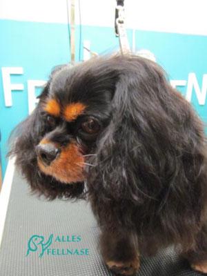 Das ist Amy, eine sehr hübsche und liebe Hundedame. 😉💕🐾🐕
