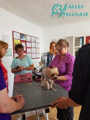 Seminar im Hundesalon Beauty und Style bei Nina Landrichter in Hollabrunn