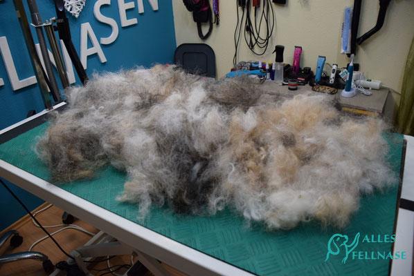 😮Einfach Wahnsinn und der Hund hat noch sooo viel Fell drauf!