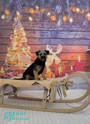 Candy 5 Monate und schon der Profi beim Hundefriseur 😍