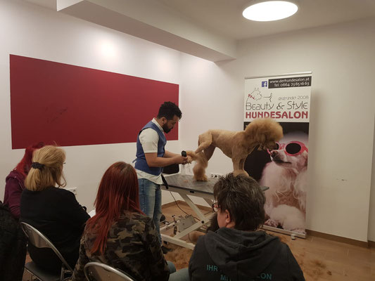 Seminar im Hundesalon Beauty und Style bei Nina Landrichter in Hollabrunn💖