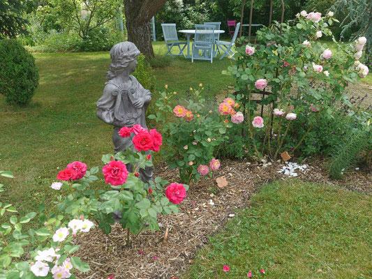 Touraine : rosiers Cassandre, Prieuré de St Côme