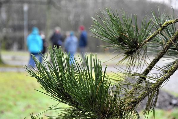 Während der Prüfung, die auf dem Landesgartensschau-Gelände stattfinden musste, da der Waldkurpark wegen Sturmfolgeschäden gesperrt war.