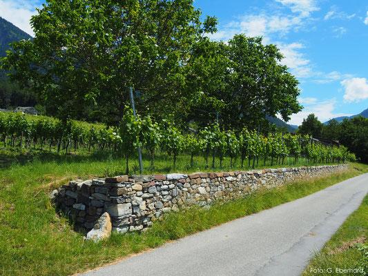 Natursteinmauer in einem Rebberg, Malans