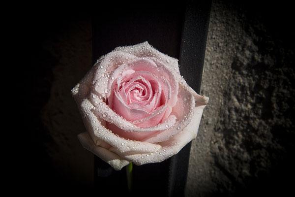 bodas miraMeh-ramo2-rosas-L&G