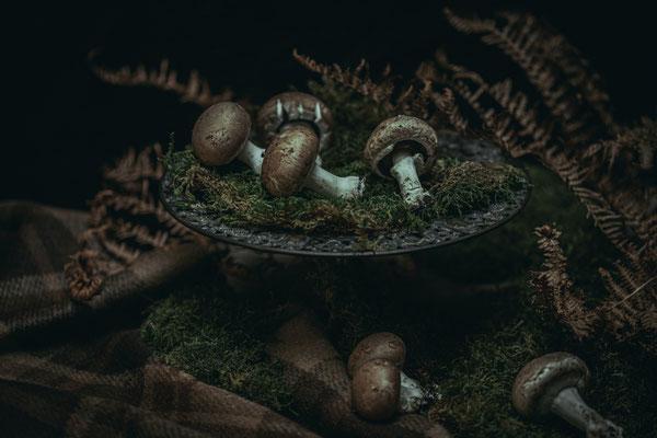 cueillette champignons automne