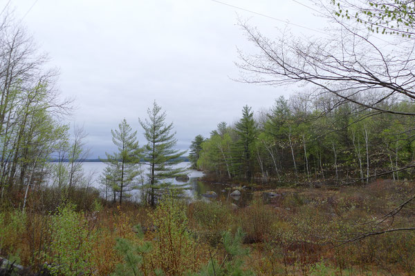 Lake Milinocket 1