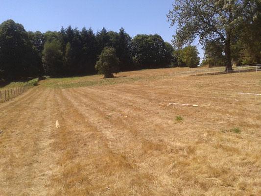 Une prairie apres la récolte du foin .