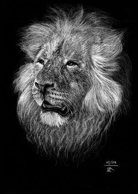 Lion force tranquille