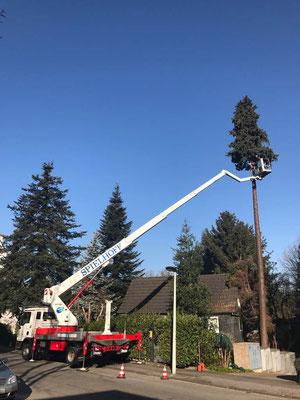 Saubere und sichere Baumfällung