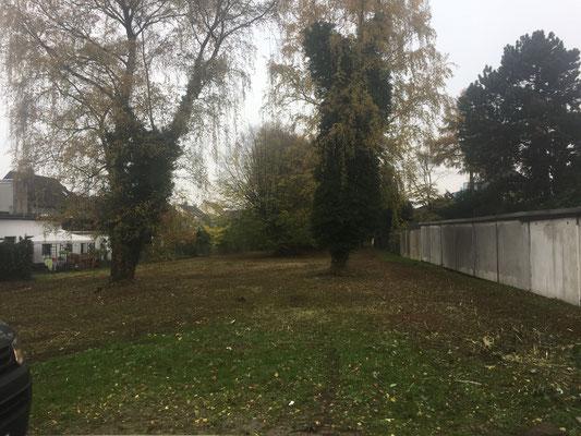 Grundstück nach der Entfernung von Sträuchern und Unterholz