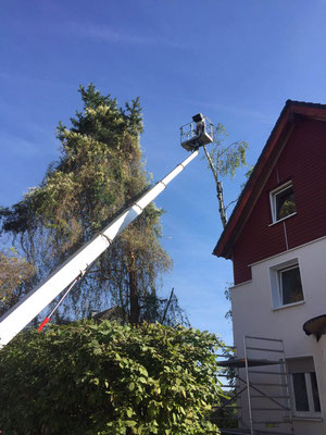 Baumpflege mit Hubsteiger
