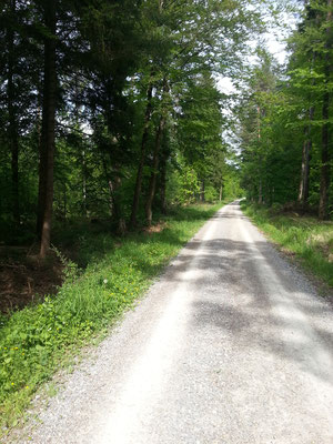 Ausgedehnte Wanderwege beginnen direkt vor der Haustüre