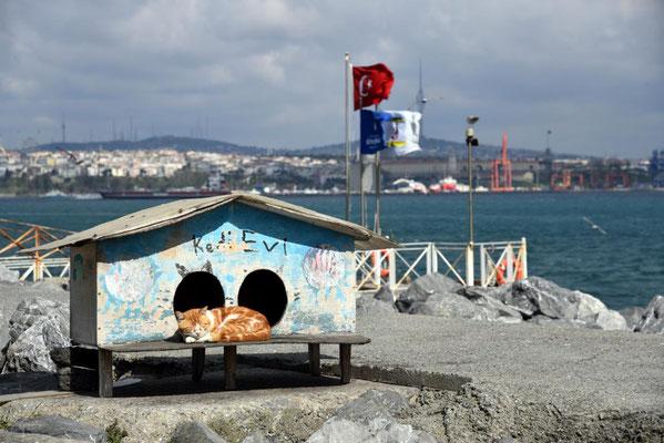 Katzenfreundliche Stadt