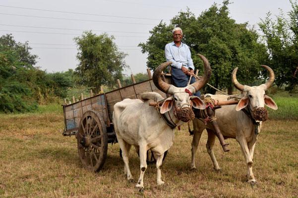 morgens um 6 Uhr in Gujarat - und wieder werden wir entdeckt