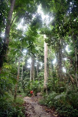 durch den Urwald