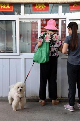 Hunde werden hier nicht gegessen - sondern kommen an die Leine