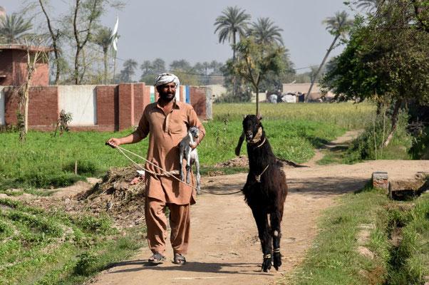 """Ranju bringt eine """"Dancing Goat"""", die bis zu 2000 Dollar kostet"""
