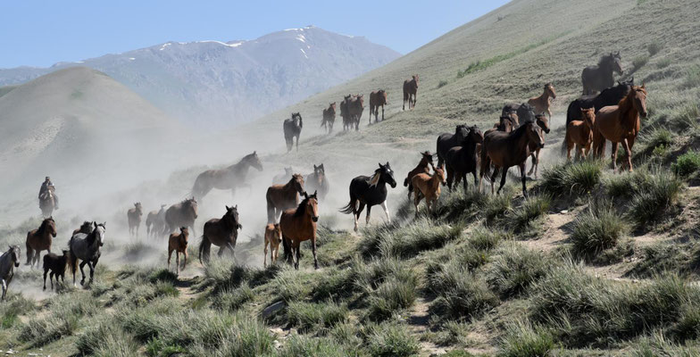 freilaufende Pferde überall - das typische Kirgisistan-Bild