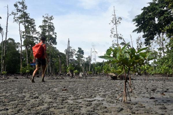 und durch Mangrovenlandschaften
