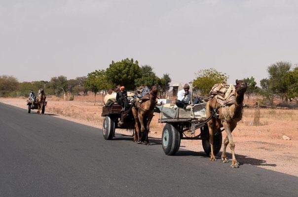 Kutsche mit Kamelen in Rajasthan