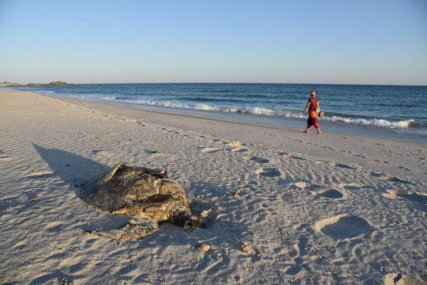 sieht man leider auch oft - tote Schildkröte am Strand