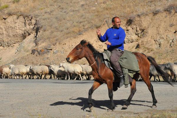 Hirte zu Pferd