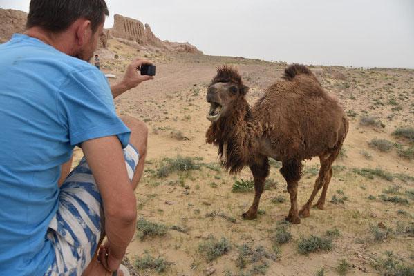Janus mit jungen Kamel (einhöckrig)