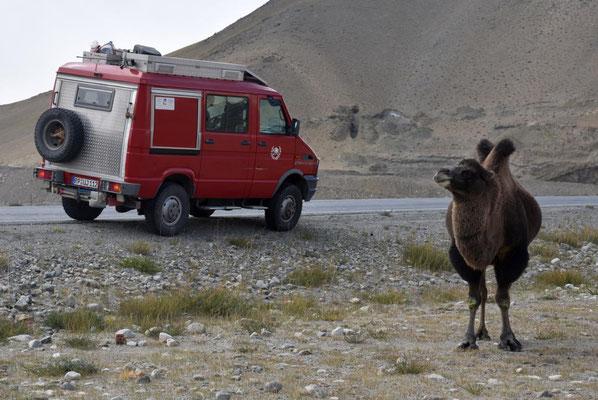 ein richtiges Kamel