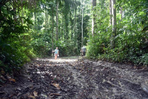 Dschungelpfad zum Elephant Beach