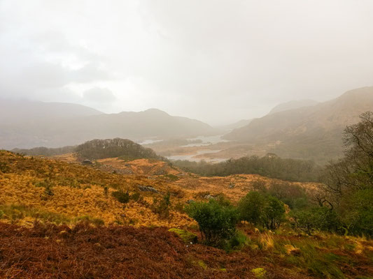 Natur Ring of Kerry