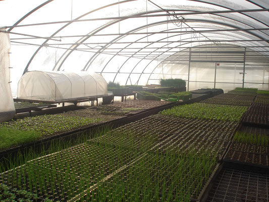 3200qm Folienhäuser und 300qm beheizbare Jungpflanzenanzuchtfläche