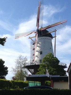 Les fameux moulins néerlandais