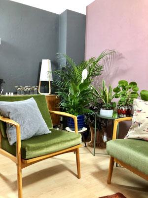 Nur einige der vielen Pflanzen in der Wohnung.