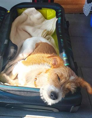 Amélie durfte schon das erste Mal in die Ferien...