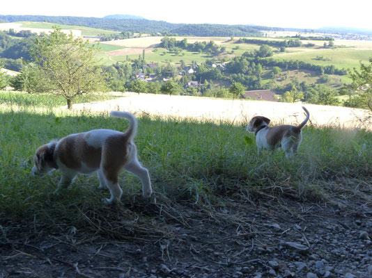 Bijou und ihre Schwester Baila beim ersten Waldausflug, auch mit den Halsbändchen