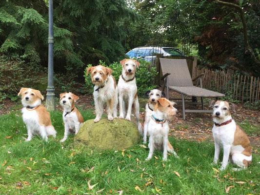 Familienbesuch! Aura und Alma, mit Brixi, Adele, Jule, Fly und Arbataxa