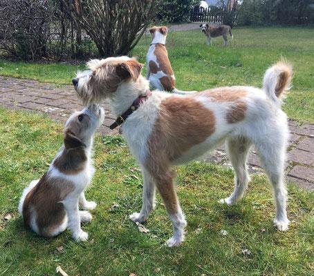 Alma hatte Familienbesuch! Brixie kam zu Besuch  mit Jule und Adele. Brixie und Aura haben die selbe Mutter und Brixie ist eine Tochter von Ibo, wie Alma auch