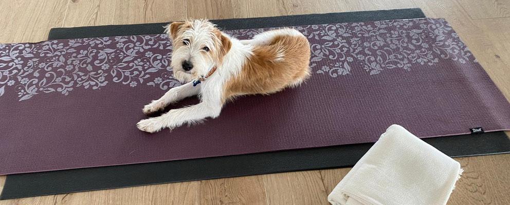 auch ein super Yoga-Partner!